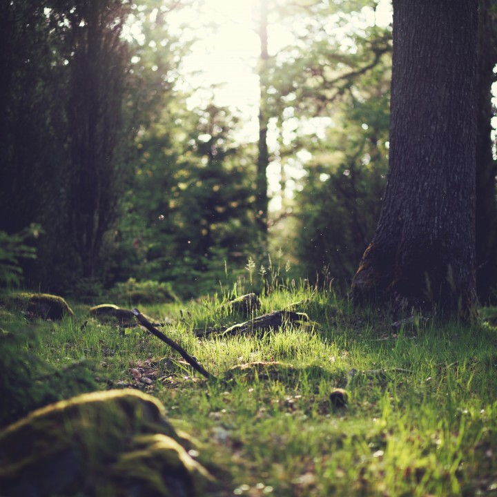 Photograph of a grassy forest